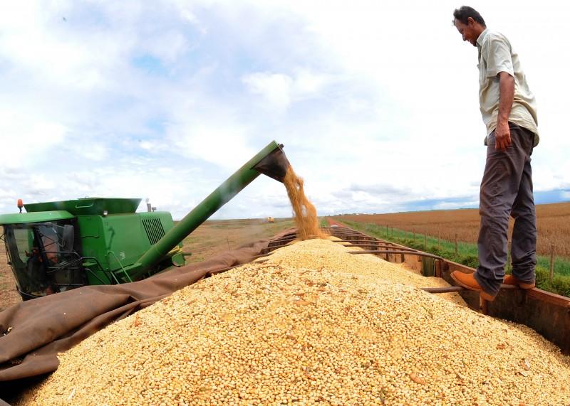 Previsão de safra de grãos para 2018 reduz para 228,1 milhões de toneladas, segundo IBGE
