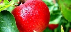 Seminário vai abordar produção de frutos de forma sustentável -VACARIA/RS