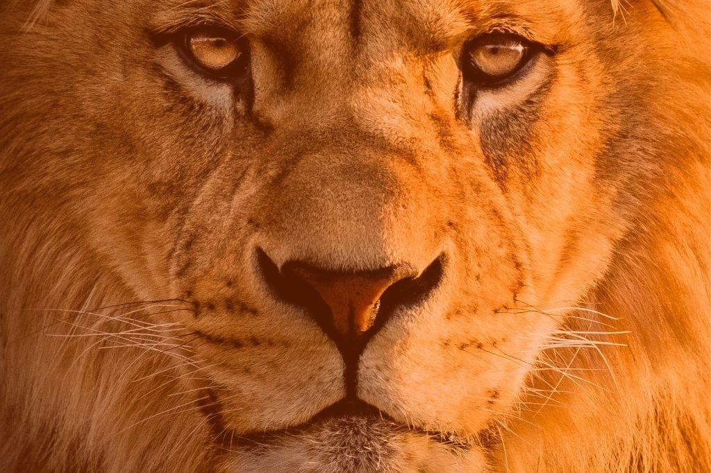 Comece a se preparar para o acerto de contas com o Leão